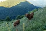 Alpages