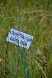 Sentier des orchidées